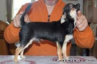 Little jack des aubépines de la Vilco