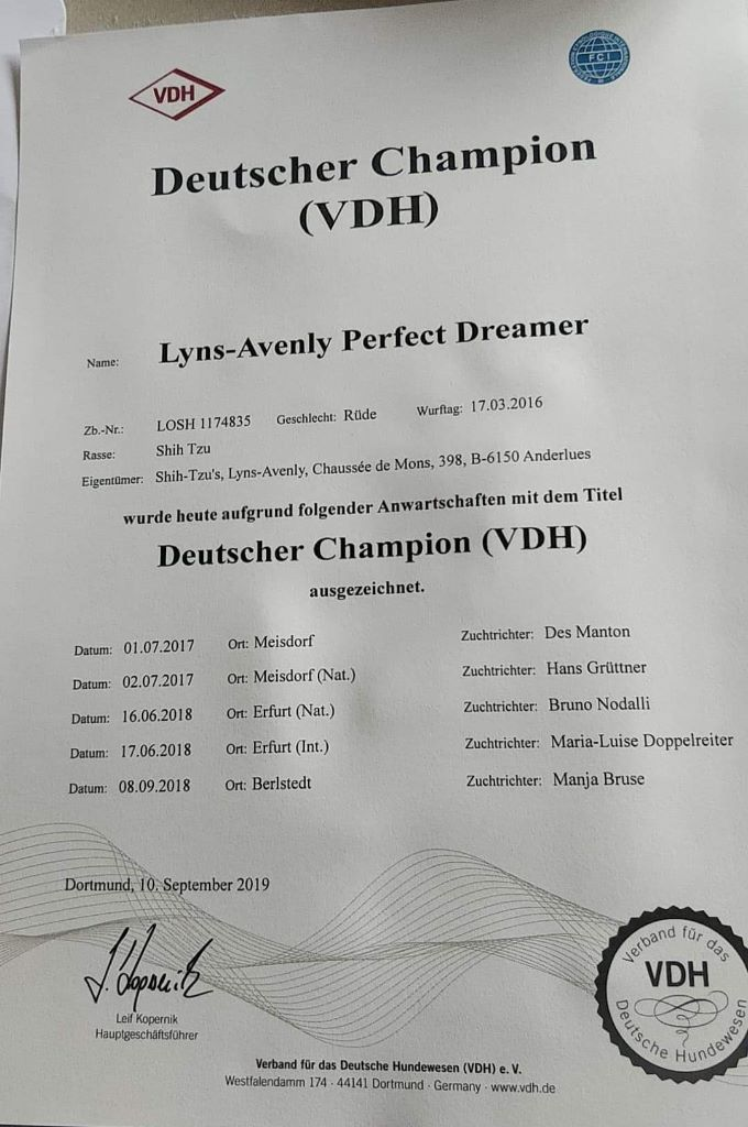 CH. Lyns-Avenly Perfect dreamer