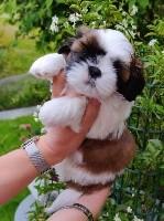 Teddy Bear (Tashi)