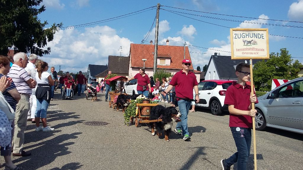 Du vol  des alouettes - Défilé de charrettes à la fête du houblon à Ohlungen le 03.09.17.