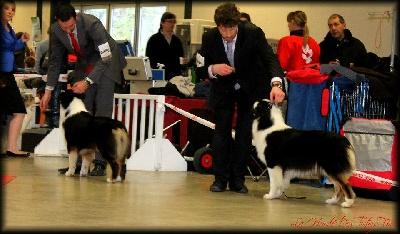 du chemin des korrigans - Première expo de l'année : Paris Dog Show