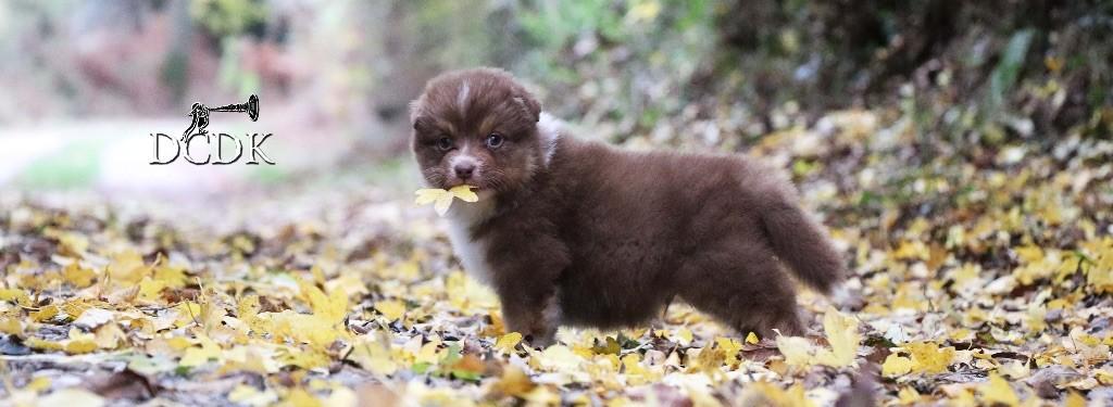 du chemin des korrigans - Les bébés d'automne