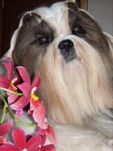 Flower de la perle tibetaine