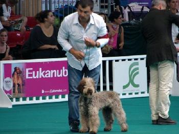 LAGOTTO-ROMAGNOLO, seul chien truffier reconnu par la F.C.I.