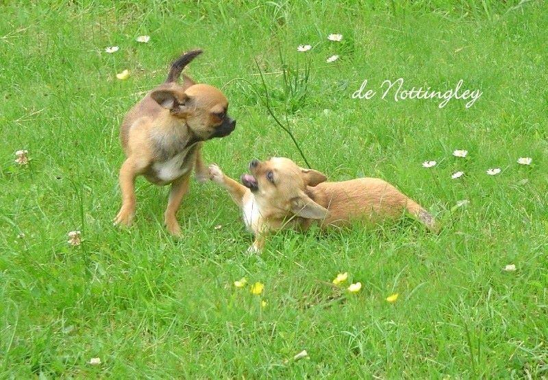 plan cult rencontre entre un chien adulte et un chiot