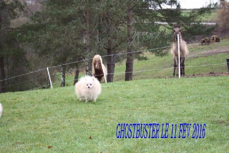 Ghostbusters des jardins de l 39 atlantique chien de race for Le jardin de l atlantique