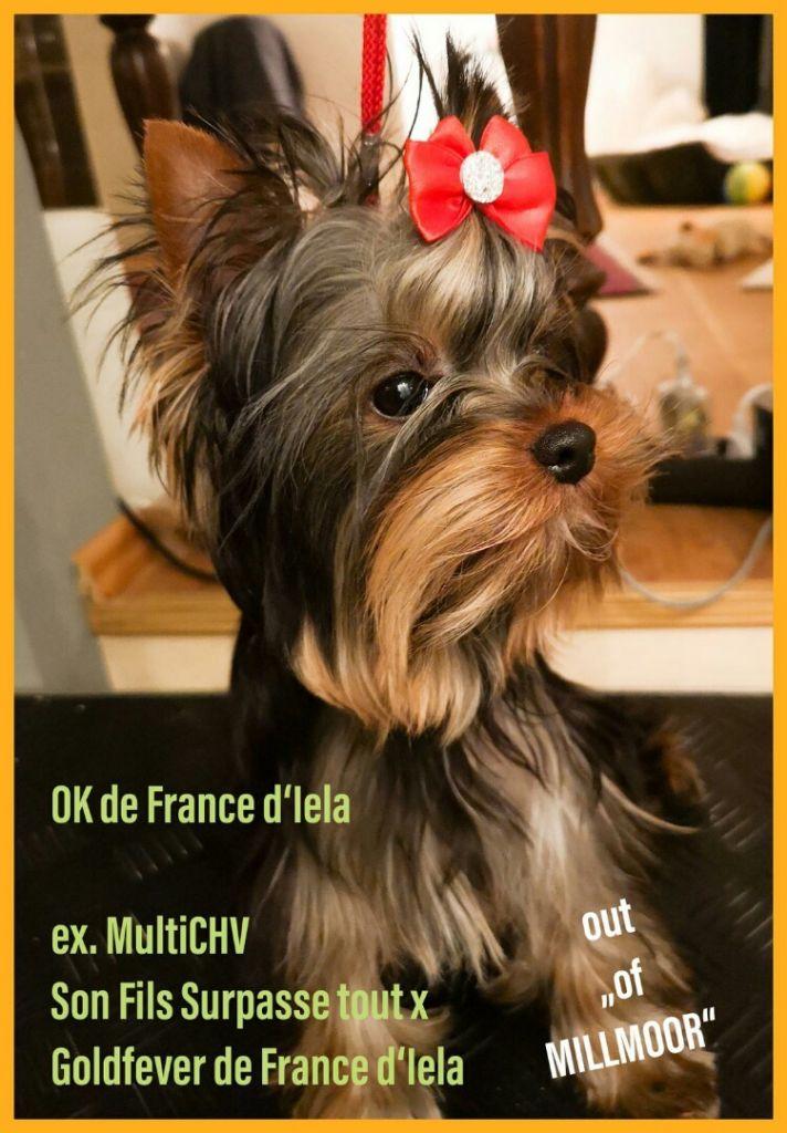 de France D'Iela -