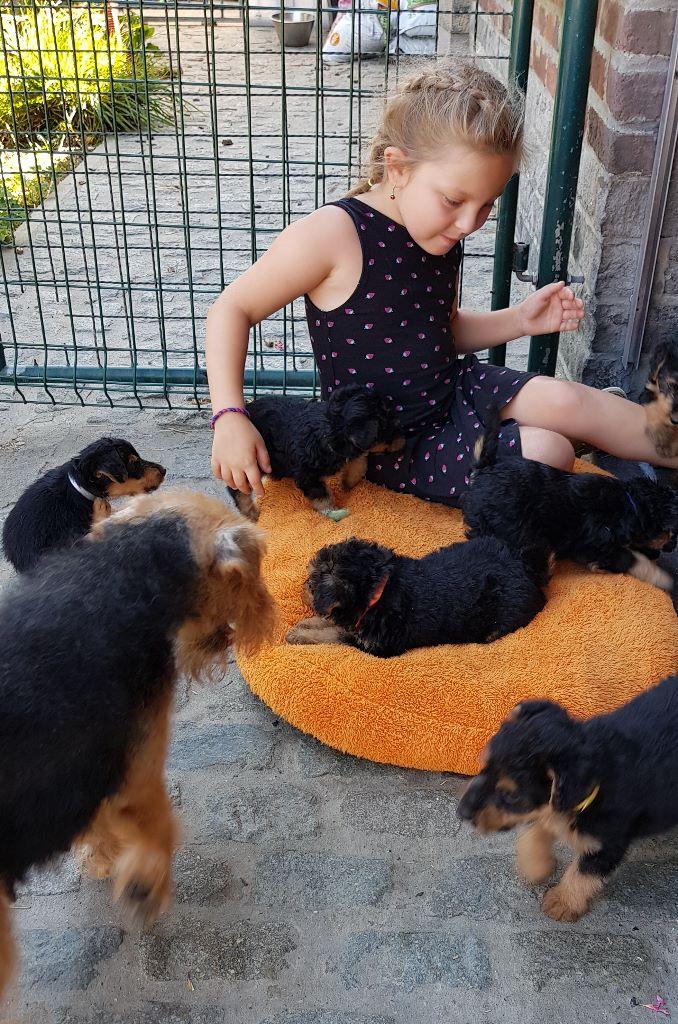 Du mas des rêves - Welsh Terrier - Portée née le 09/07/2019