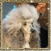 - CACIB VALLS ESPAGNE 29/01/2012