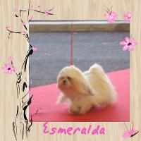 Esmeralda Del rey rakashi