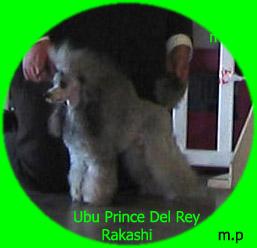 Publication : Del rey rakashi