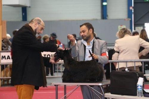 du Harpouy D'Auzan - Internationale Toulouse 19/02/17