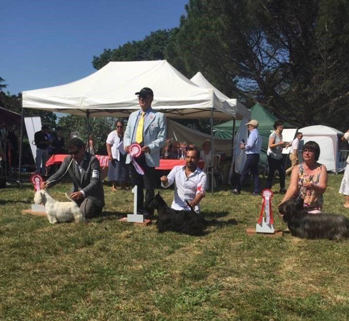 du Harpouy D'Auzan - Spéciale de Race Toulouse le 11/06/17