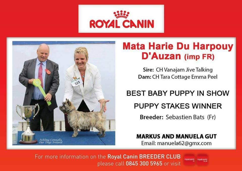 du Harpouy D'Auzan - Meilleur Puppy Cairn Terrier en Irlande !