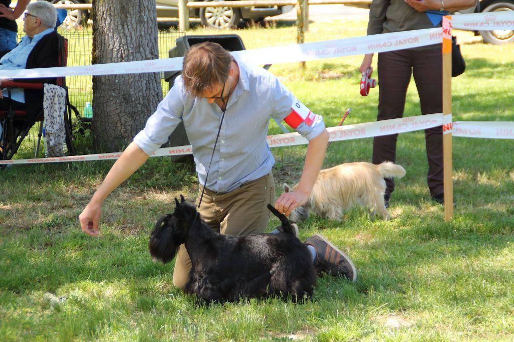 du Harpouy D'Auzan - Régionale d'élevage Origne 33 21/05/17