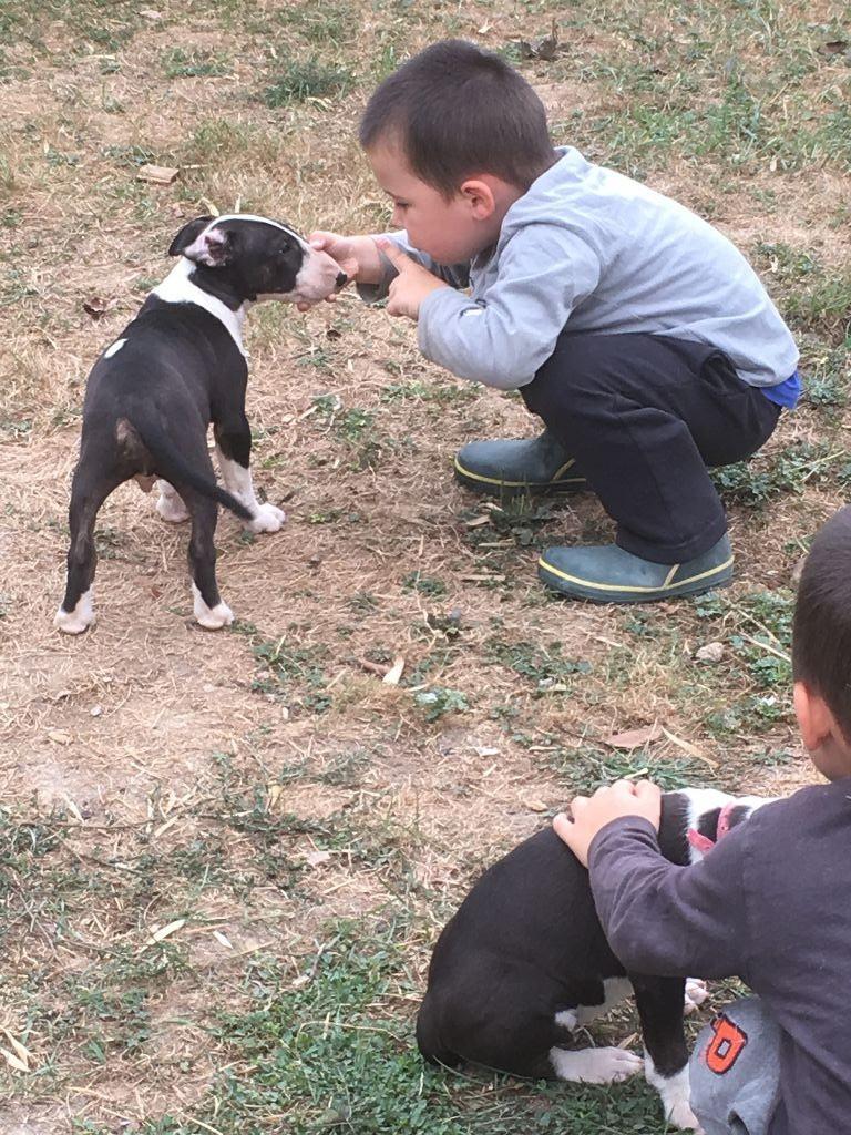 Des gardiens de gaia - Chiot disponible  - Bull Terrier Miniature
