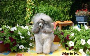 Publication : The beautiful grey of marysa  Auteur : Marie M. - BGOM -