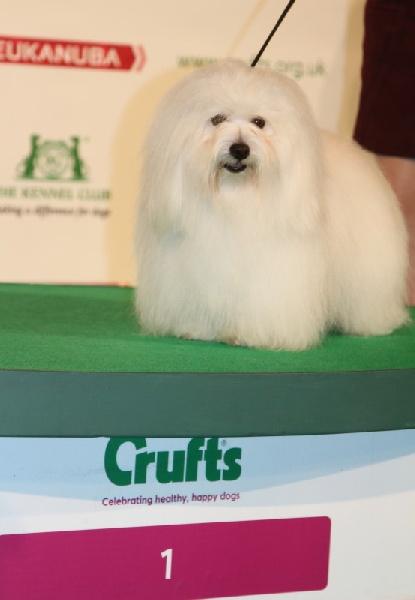 Photo elevage du haut marais eleveur de chiens coton - Salon du chiot paris ...