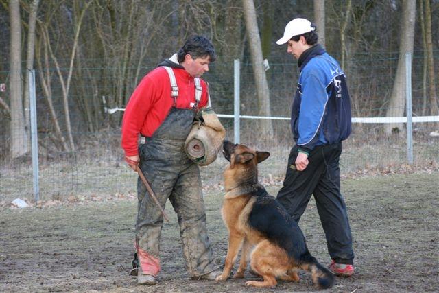 Accueil - Elevage Du normont - eleveur de chiens Berger