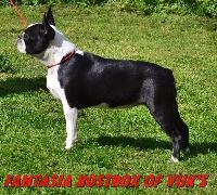 CH. Fantasia bostbox of vuk's
