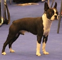 CH. Ho he matelot Du grand fresnoy - EUROPEAN DOG SHOW