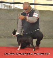CH. Canmoy's Boston rockbell - 2éme EXC CLASSE CHAMPION RCACIB