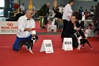 CH. Canmoy's Boston rockbell - 1ére Exc classe Ouverte CACS R.CACIB