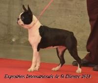 Ophelie vom norden haus - 2éme Exc Classe Puppy