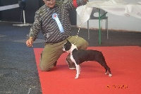 CH. Fantasia bostbox of vuk's - 1Ere EXC classe ouverte CACS R.CACIB