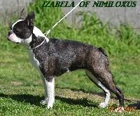 Izabela Of nimiloxus - 1ere EXC CLASSE OUVERTE R.CACS