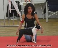 Osiris isis vom norden haus - 1ére Très Prometteur classe Puppy