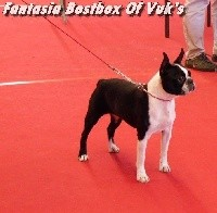 CH. Fantasia bostbox of vuk's - 1ére Exc classe Champion CACIB