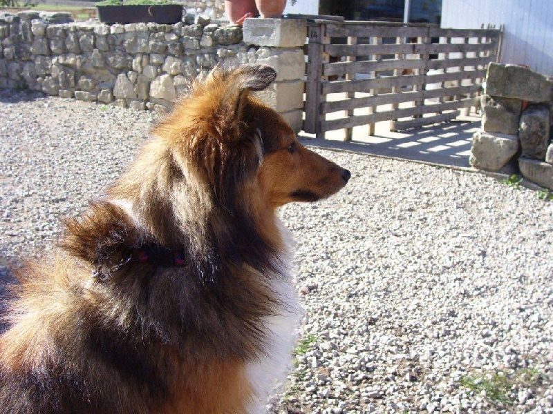 Bitwine de falicobas chien de race toutes races en tous for Bitwine
