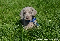 ORTHUS Edelweims de la Claree