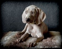 OPAL OF SINCLAIR'S Edelweims de la Claree