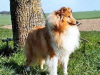 Blondie girl de la Vallée de l'Aisne