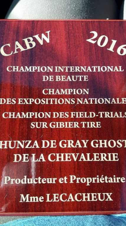 Publication : De gray ghost' de la chevalerie  Auteur : florent de Sars