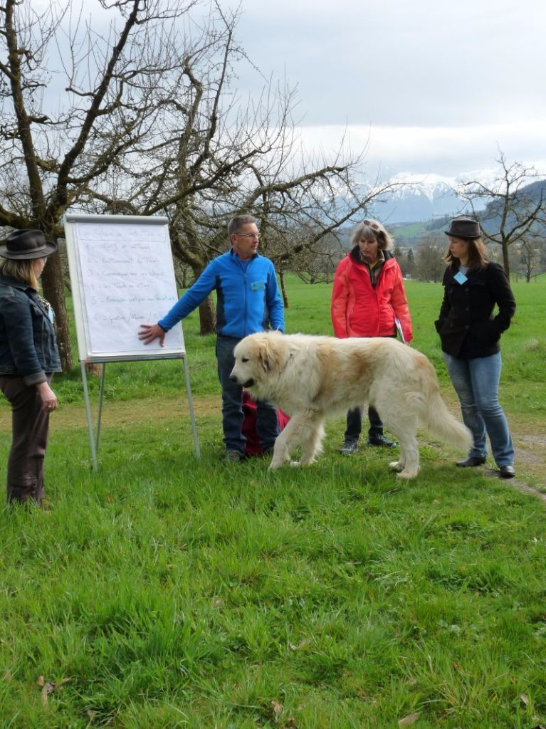 du Hogan des Vents - Formation au TTouch 2017 pour les chiens et leurs propriétaires