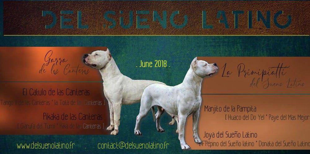 del Sueno Latino - Chiot disponible  - Dogo Argentino