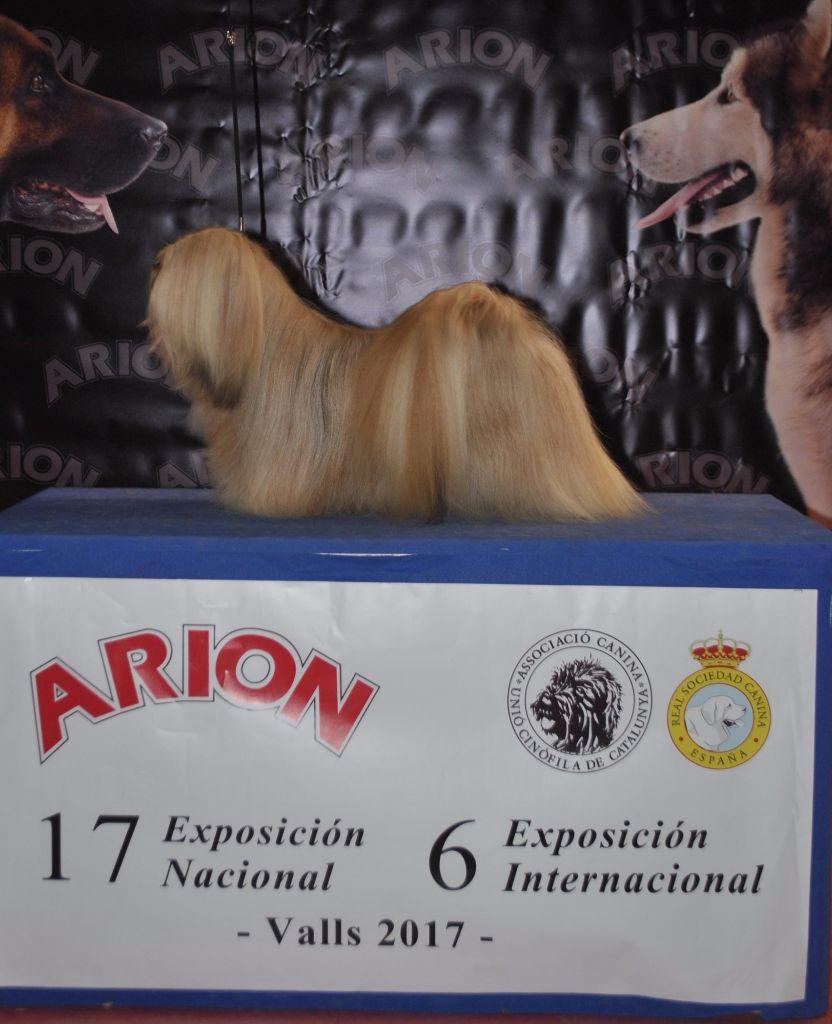 des fillots de morphée - Résultats d' Espagne