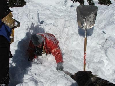Des seigneurs de montbel - les chiens d'avalanche