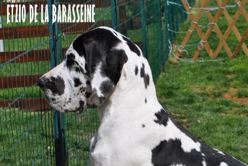 Etzio de la Barasseine