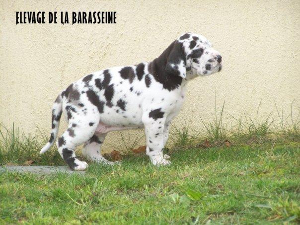 Ekira de la Barasseine