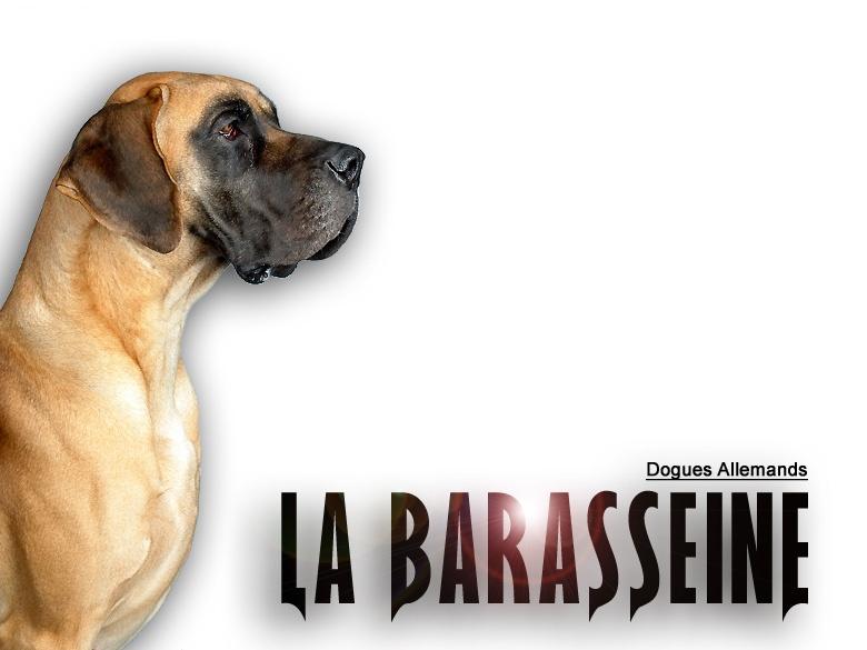 de la Barasseine