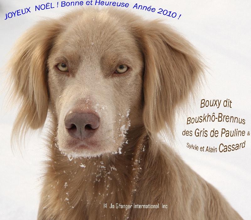 CH. TR. Bouxy dit bouskho-brennus des Gris de Pauline