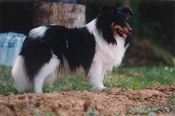 Accueil - Elevage of Wind River - eleveur de chiens