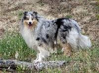 Iliade-silver-blue des stuarts de boisbelle