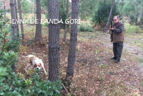 Elevage de landa gori