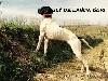 - ILY DE LANDA GORI : EXCELLENT G Q Espagne .!