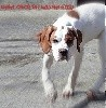 - NAÏA EDER DE LANDA GORI 4mois: L'oeil du prédateur